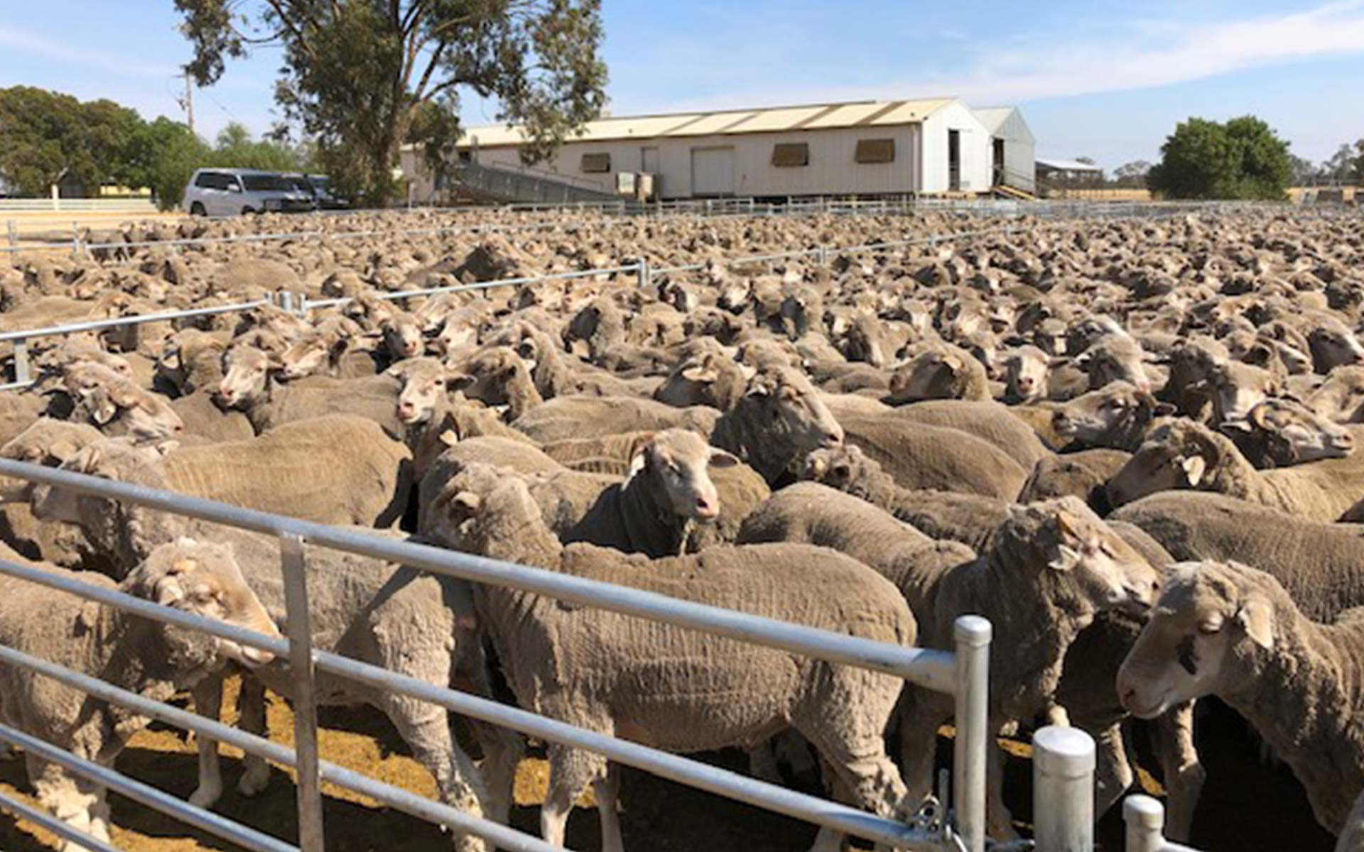 Livestock Production, Hawkins Booroopki Farms