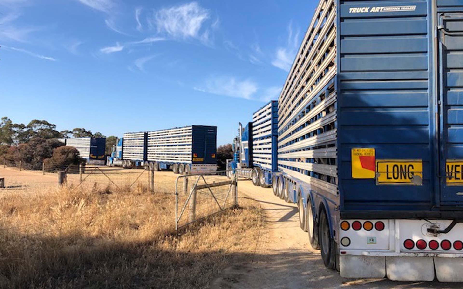 Livestock Production, Hawkins Booroopki Farms