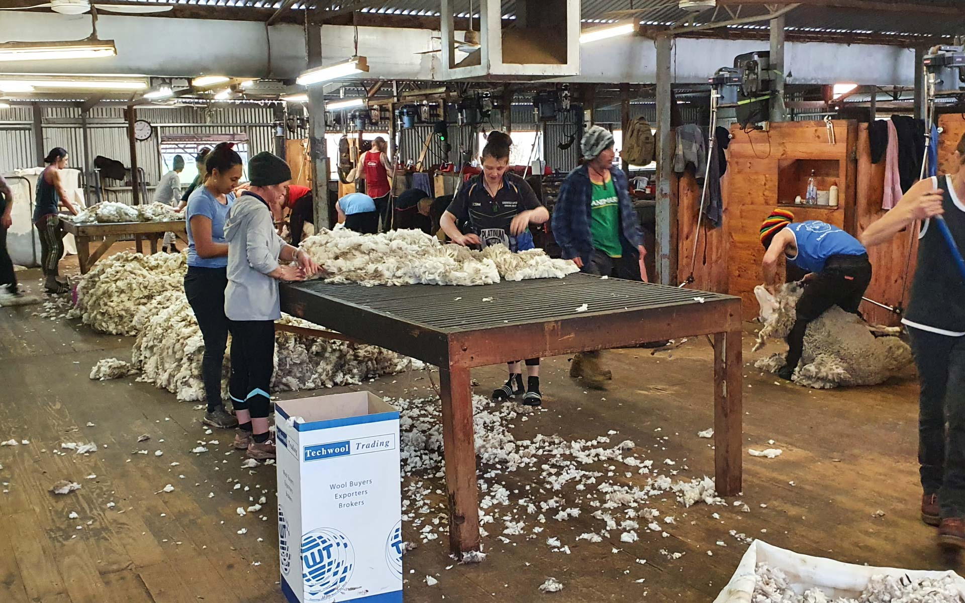 Wool Production, Hawkins Booroopki Farms
